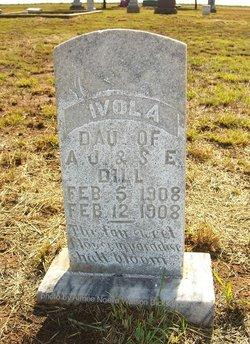 Ivola Dill