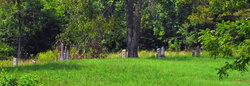 Braford Family Cemetery