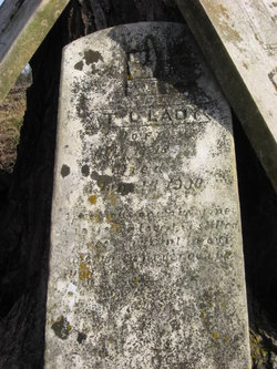 Thomas L Lady