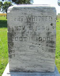 Bert Whitted