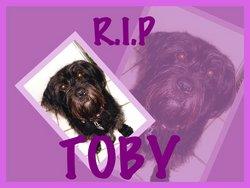 """Toby """"Dorky Dog"""" Cochran"""