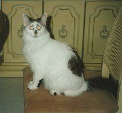 Smudge <I>Cat</I> Helm