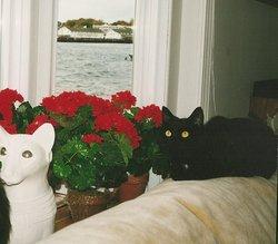 """Jasmine """"Jazzi"""" <I>Cat</I> May"""