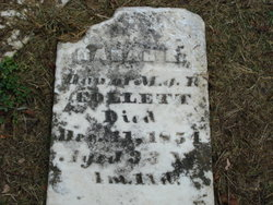 Sarah R Collett