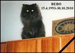 """Baby """"Bebo"""" Cat"""