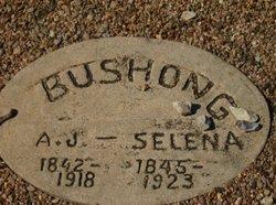 Andrew J Bushong