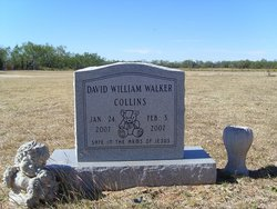 David William Walker Collins