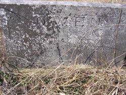 Molissiea F. <I>Glover</I> Owen
