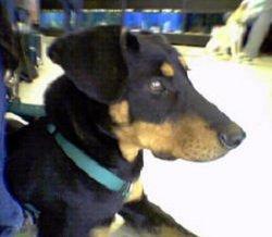 Violet The Dog