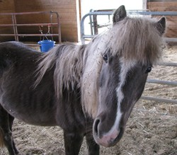 Corrie The Horse