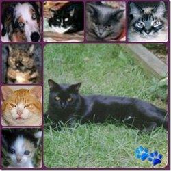 """Moochard """"Moochie"""" <I>Cat</I> Kagarise"""