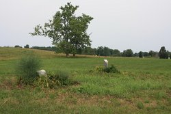 Louderback Family Cemetery