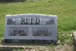 Cevila Reed