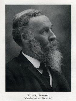 Wilfrid J Dorward