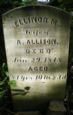 Ellinor M Allison