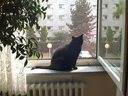 Dicke Cat