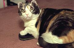 Scarlett Cat