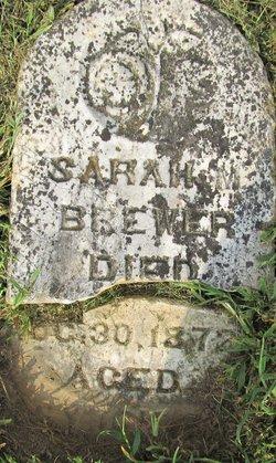 Sarah M Brewer