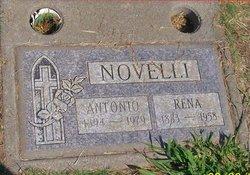 Rena Rose <I>Calabria</I> Austi Novelli