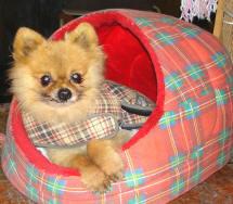 Basil The Dog