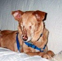 Samantha The Dog