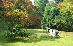 Horace Wilson Cemetery