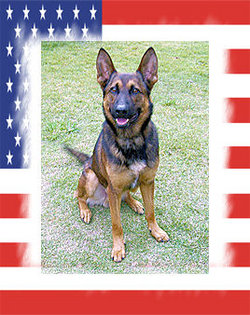 Sgt Yoris dog-K9
