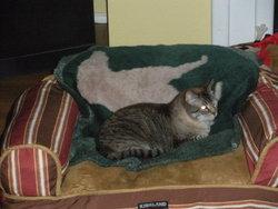 Dusty Kitty Meow-Meow Barnes