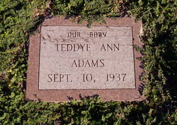 Teddye Ann Adams