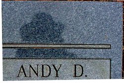 Andy D. Martin