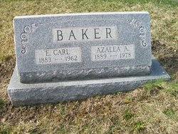 Azalea A <I>Andrews</I> Baker
