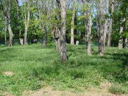 Beecher Cemetery
