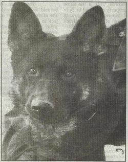 Rambo dog-K9