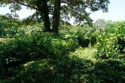 Brockman Cemetery at Greenway