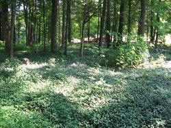 Beech Springs Cemetery
