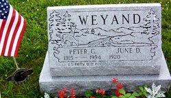 Peter G Weyand