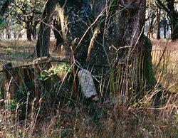 Allen Moore Grave