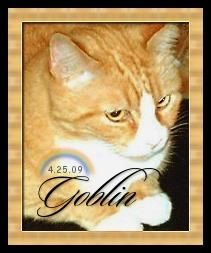 "Goblin Bachman ""Golden Boy"" Cat"