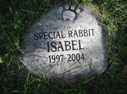 Isabel the Pet Rabbit
