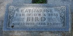 Catherine Bird