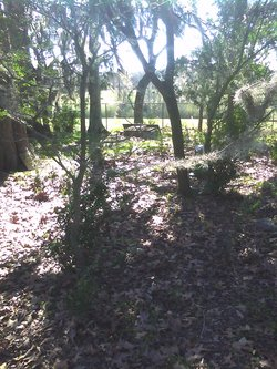 Slay Family Cemetery