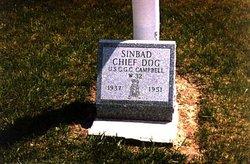 Sinbad Dog
