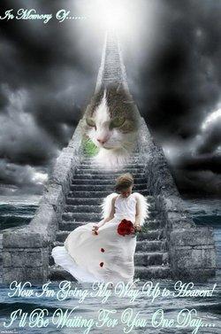 Cinka Cat