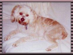 """Princess Bachman """"Prin"""" Dog"""