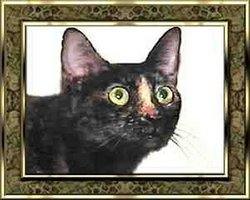 Missy Hedge Cat