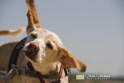 """Baxter """"PupDawg"""" Goodwin"""