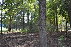 Pettigrew-Ivy Family Cemetery