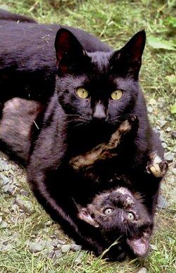 """Edle Lee """"♥♥"""" <I>Hecht</I> Cat"""