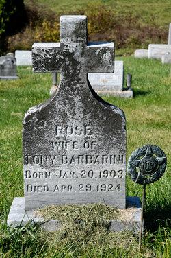 Rose <I>Montepery</I> Barbarini