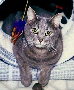 "Charlotte Char ""Char-B-Lou"" <I>Hecht</I> Cat"